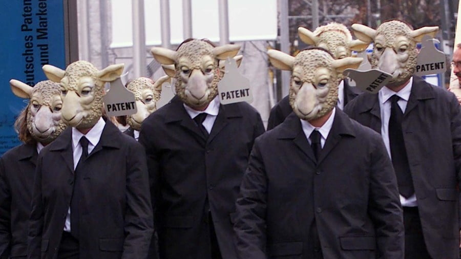 Scientists Create Human-Sheep Chimera with Hopes of Affordable Organ Transplants