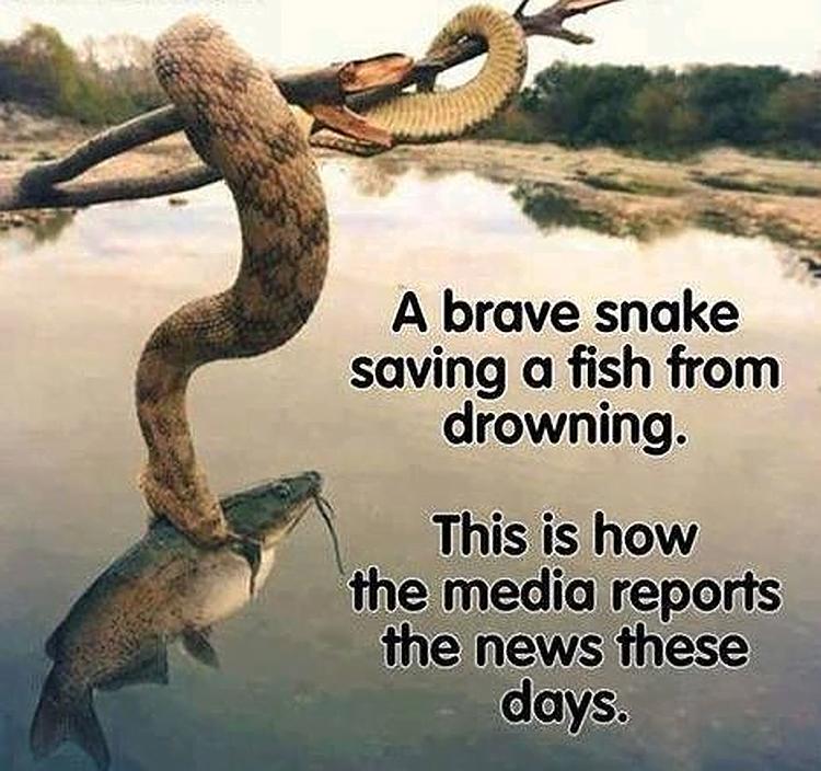 media-reporting