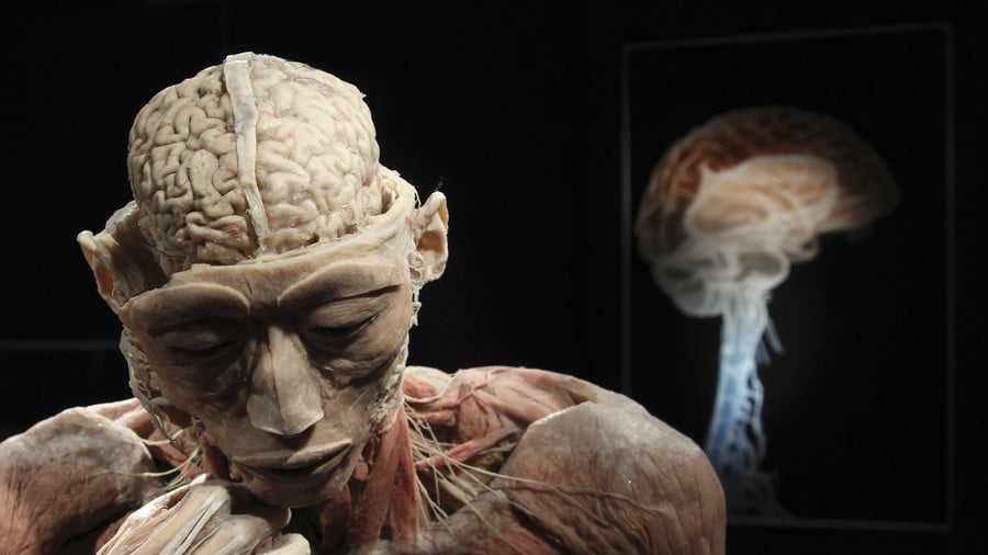 A plastinated human body exhibit © Francois Lenoir / Reuters