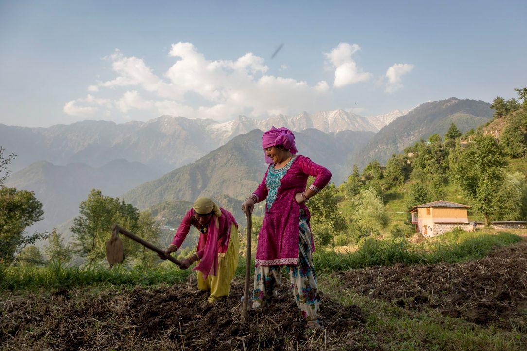 Women prepare a field for sowing corn in Dharmsala, India, May 22, 2018. Ashwini Bhatia/AP
