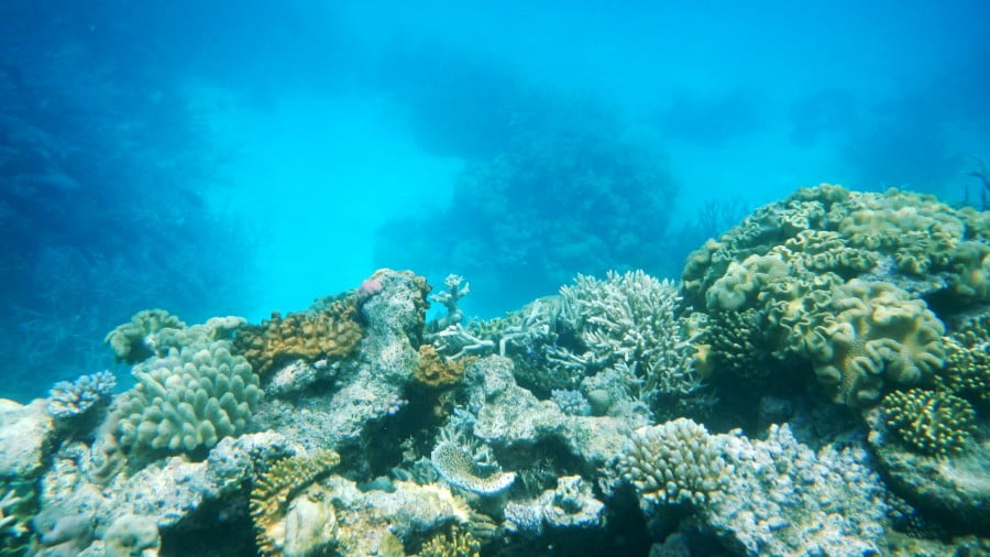Marine Heat Waves, Changing Ocean Currents and Capitalism's Threat to Life