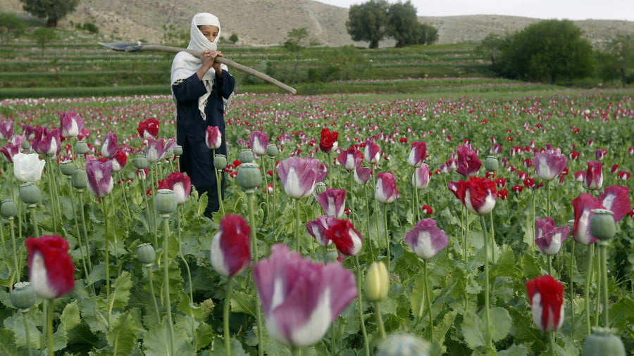 US Money to Support Afghan Irrigation 'Helped' Poppy Cultivation
