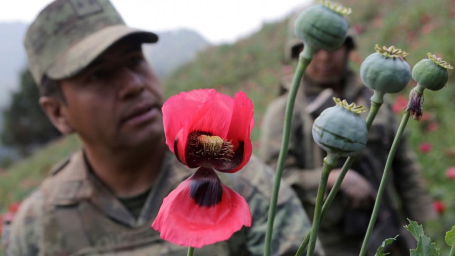 The US would be Under Serious Hybrid War Threat If Mexico Legalized Opium