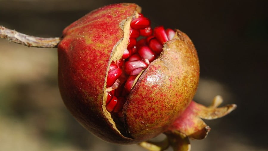 100+ Health Properties Of Pomegranate Now Includes Helping Diabetics