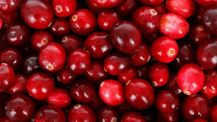 Cranberries Help Antibiotics Fight Bacterial Infections