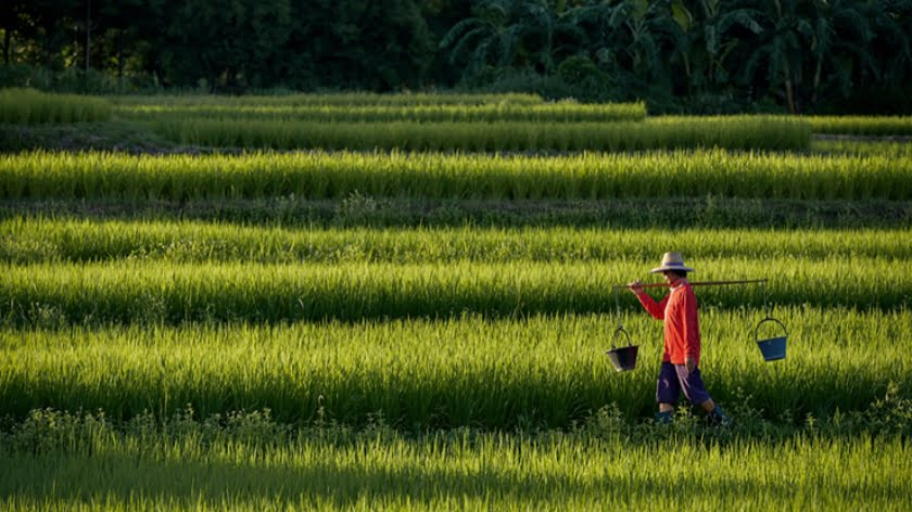 China's Long March to Total Food Security