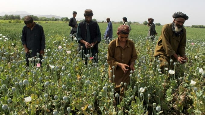 NATO'S Appalling Failure in Afghanistan has Fuelled a Drug Explosion Across Europe