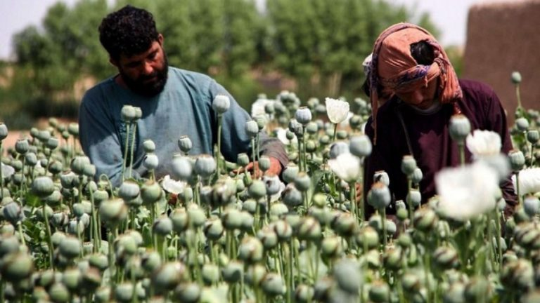 Who is to Blame for Afghanistan's Opium Frenzy?