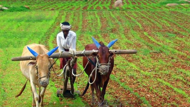 Health and Wealth in India – Farmers' Lives Matter
