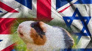 Guinea Pigs United